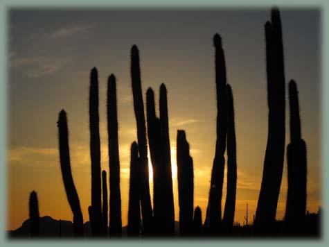 Les BOULINGUEURS..de la PLANETE.... Arizona_organ_pipe_39