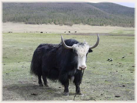 Voyage à travers la Mongolie et la Chine -